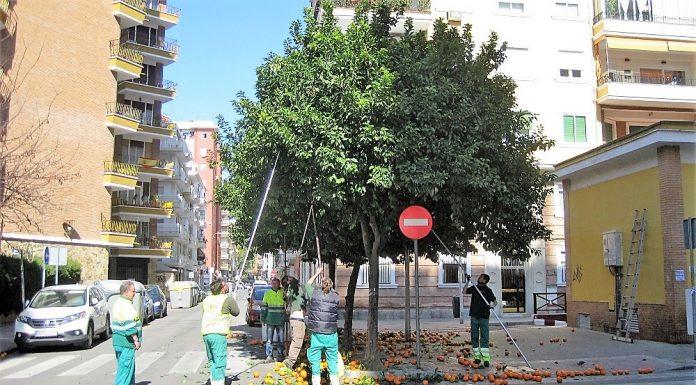Recolección en una calle cualquiera de Sevilla. PROPRONEWS