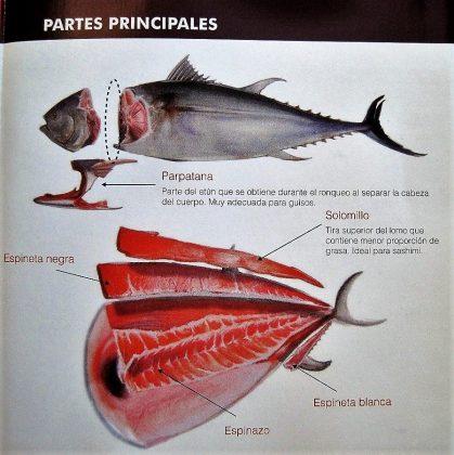 Didáctica del atún.