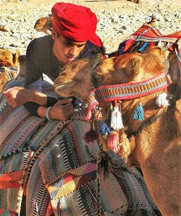 Camellero de Petra.
