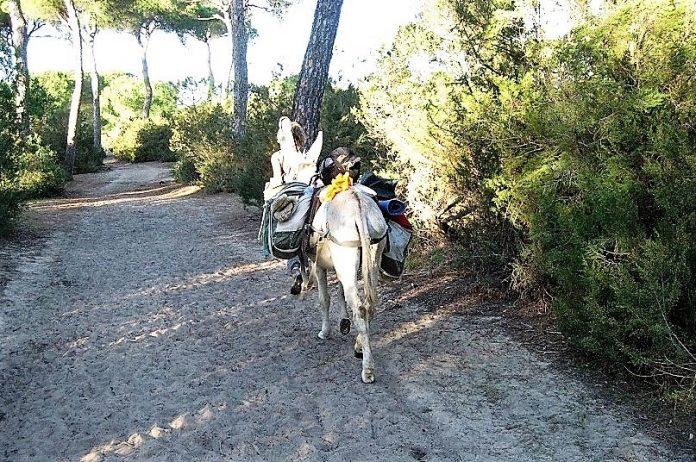 Andalucía sigue en el furgón de cola de España y de Europa. Las zonas rurales están abandonadas, como muchas ciudades. PROPRONews