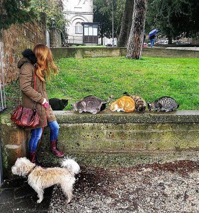 La periodista y Killer socializando con los gatos de Orvieto.