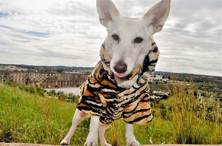 Hola, soy Tony. Vendemos moda y toda clase de productos para mascotas a todo el mundo. PROPRONews