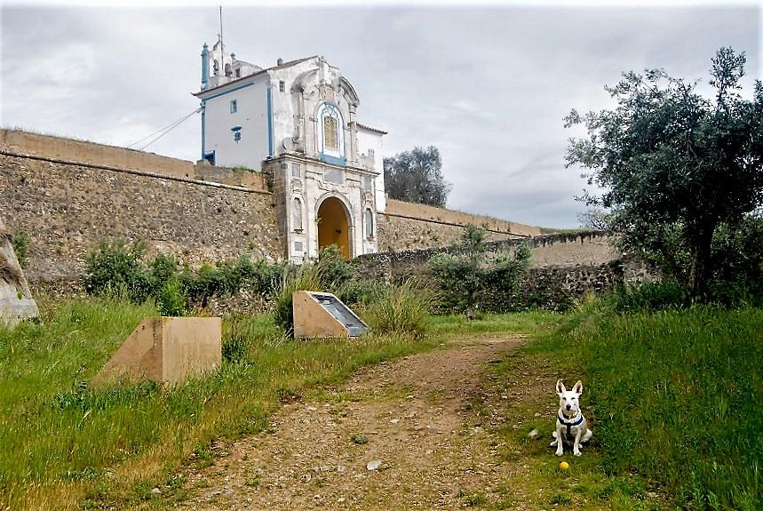 Tony vive con su dueño y empresario en Elvas (Portugal). PROPRONews