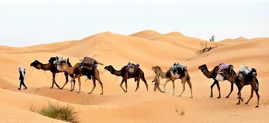 Las caravanas contribuyeron a la expansión de la religión y la lengua.