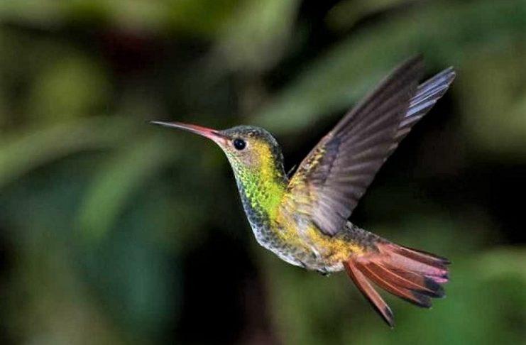 La lección del colibrí. RTVE