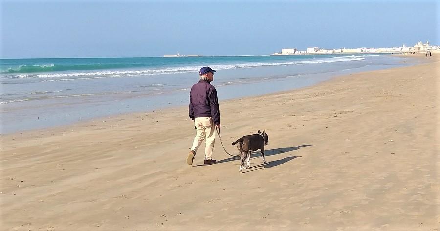 Perro potencialmente peligroso, en zona prohibida y sin bozal.