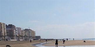 Vista de playa Victoria, con la presencia de numerosos perros. CEDIDA