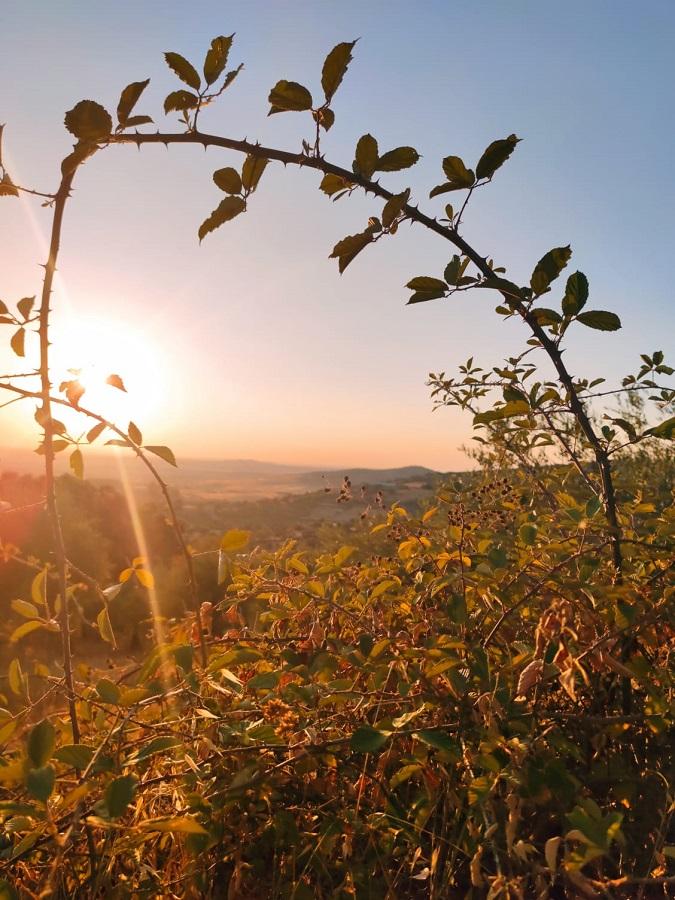 Las doradas luces del otoño. LAURA PAGADOR DOMÍNGUEZ