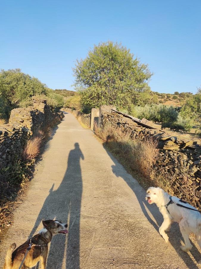 Los jóvenes paseantes se reconocen en sus sombras y en sus perros. LAURA PAGADOR DOMÍNGUEZ