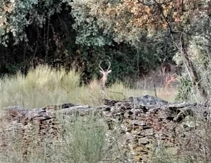 Y aparecieron los ciervos. LAURA PAGADOR DOMÍNGUEZ