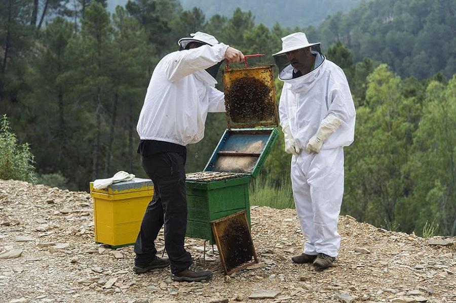 Experiencias de apiturismo en Las Hurdes. SITY
