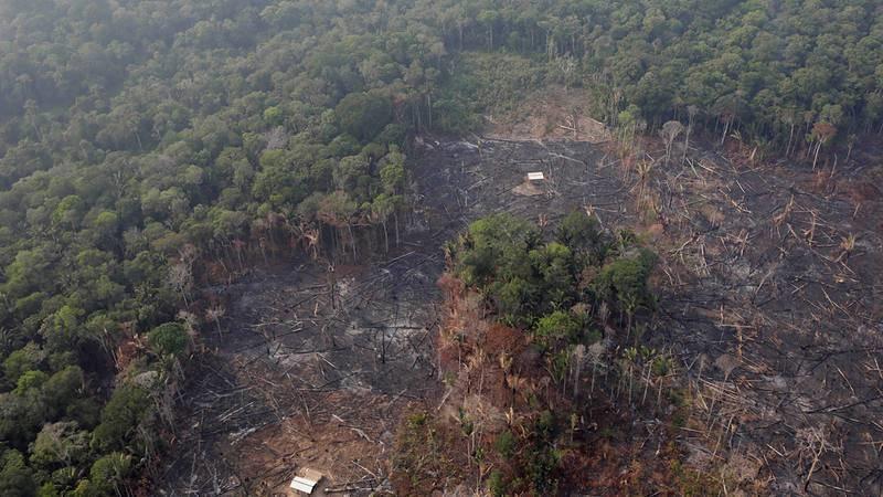 La deforestación amenaza el ecosistema y la producción de alimentos. RTVE