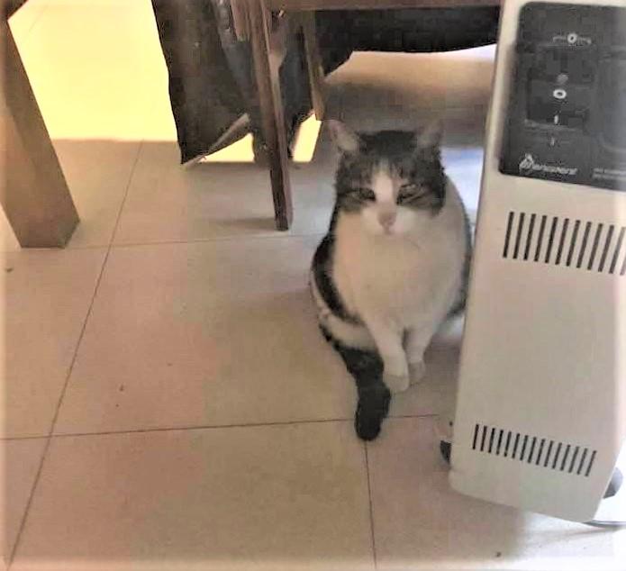 El Jimy busca la estufa.