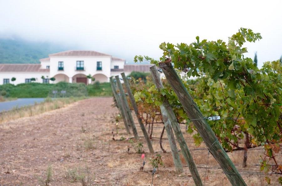 Bodegas Viña Santa Marina, de Mérida. SEBASTIÁN CARBINI