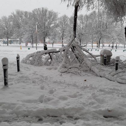 El árbol caído. ADRIÁN PAGADOR SARACHO