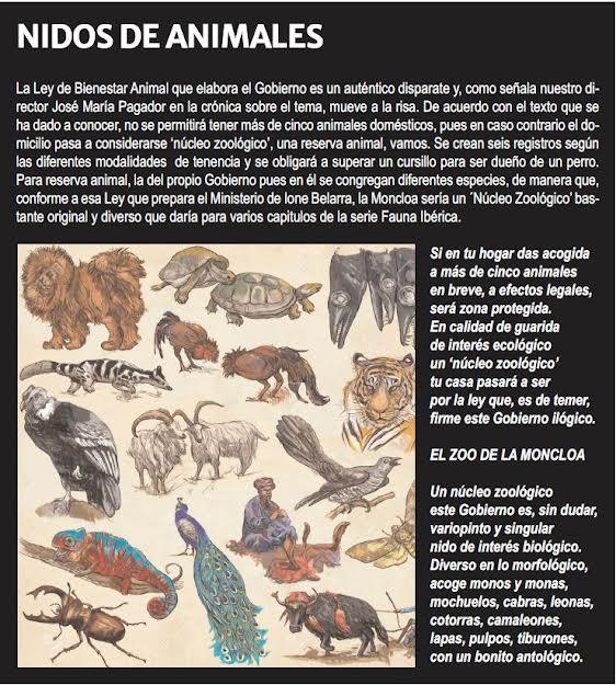 Nidos de animales